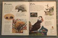 The Kingfisher First Animal Encyclopedia (54)