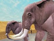 African-bush-elephant-zootycoon2018