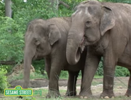Elmo's World Asian Elephants
