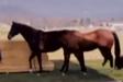 Evan Almighty Horses