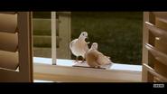 Evan Almighty Pigeons