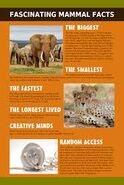Fascinating Facts about Mammals