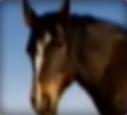 Horse-disneythinkfast
