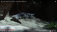 San Diego Zoo Siamese Crocodile