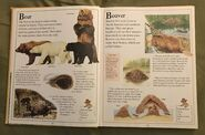 The Kingfisher First Animal Encyclopedia (8)