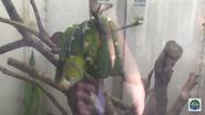 Zoo Knoxville Emerald Tree Boa