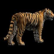 Zoo Tycoon Tiger