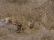 Amazing-animals-activity-center-lion