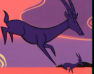 Globehunters Gazelles