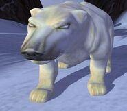 Polar Bear IC
