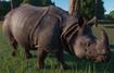 Rhinoceros, Indian (Planet Zoo)