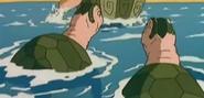 TWT Green Sea Turtles