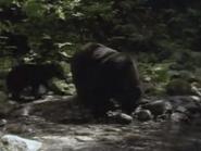 Amazing-animals-activity-center-black-bear