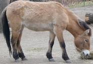 Calgary Zoo Horse