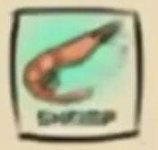 IMG df shrimp.jpeg