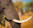 Image-20161007-8965-qb6sce Elephants