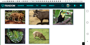 KND Brazilian Animals