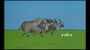 Know the Alphabet Yaks