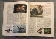 The Kingfisher Illustrated Encyclopedia of Animals (63)