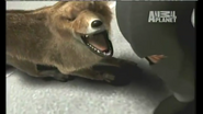 UTAUC Fox