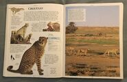 DK Encyclopedia Of Animals (58)