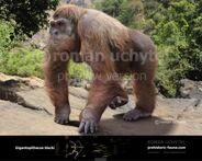 Gigantopithecus-blacki-738x591