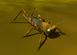 Grasshopper IC