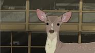 HBO Animals Deer