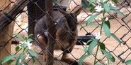 LA Zoo Wallaby
