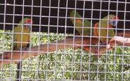 Macaw in arizona's wildlife world zoo