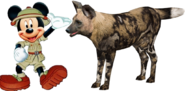 Mickey meets African Wild Dog