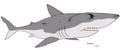 Shark ty-the-tasmanian-tiger