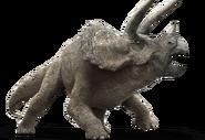 Triceratops-detail-header