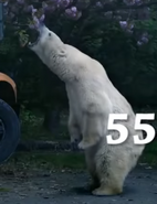 Zoo 2015 Polar Bear