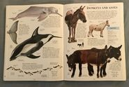DK Encyclopedia Of Animals (71)