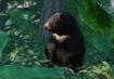 Formosan-black-bear-planet-zoo
