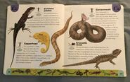 Reptiles and Amphibians Dictionary (6)