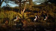 TLK 2019 Storks