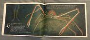 The Incredible Crab Alphabet Book (6)