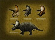 Triceratops species by thejuras dattbnb-fullview