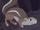 White-Tailed Antelope Squirrel