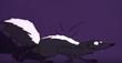 Skunk rrv