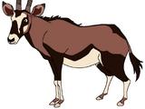 Bessie the Beisa Oryx