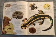DK Encyclopedia Of Animals (9)