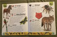 Endangered Animals Dictionary (19)