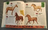 Horse Dictionary (9)