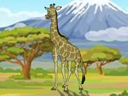 Rileys Adventures South African Giraffe