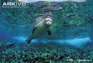 Seal, Hawaiian Monk