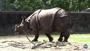 Baton Rouge Zoo Indian Rhino