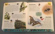 Bug Dictionary (1)